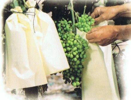 De Papieren Zak : Meel papieren zak verpakkingsmachine gemalen koffie