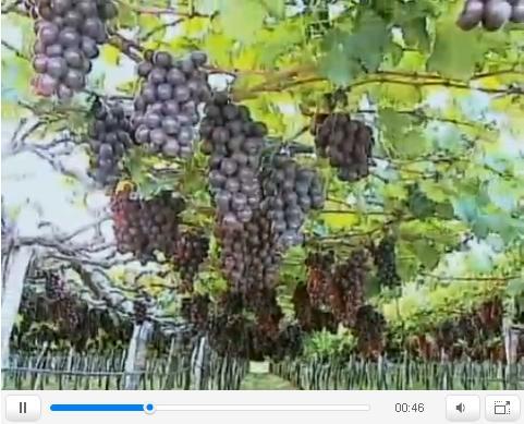 Invernaderos greenhouse variedades para el cultivo de - Como hacer invernadero casero barato ...