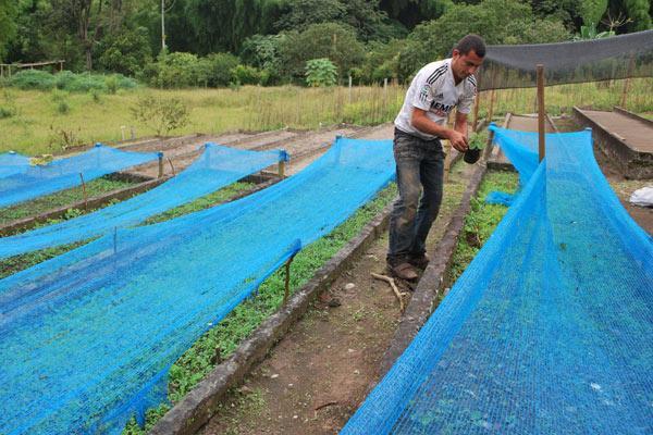 Municipio busca iniciar un proceso de reforestaci n en el for Viveros en colombia