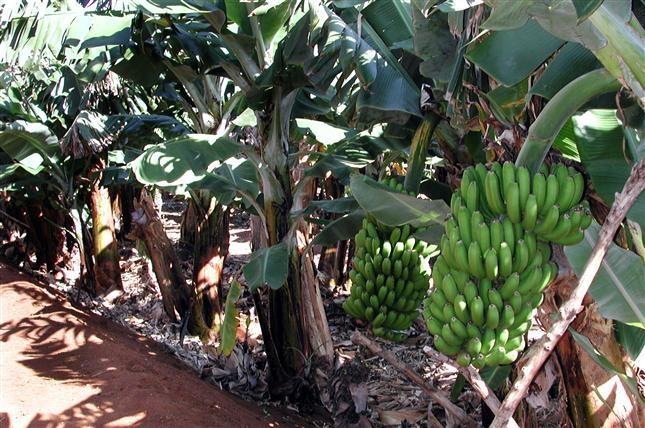 Resultado de imagen de productos agrícolas canarias
