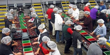 chile exporta: