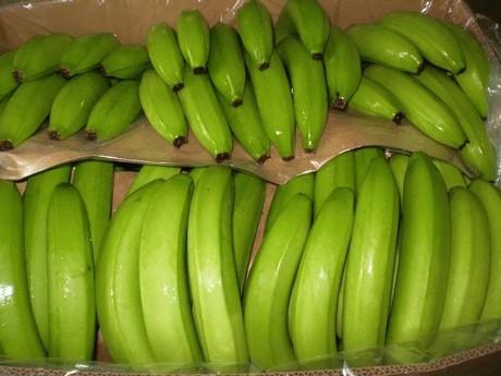 Almacen de bananas y banana para la nena - 5 1
