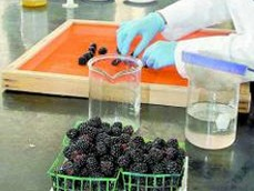 Mexico: Researchers designs edible package coatings for fruit
