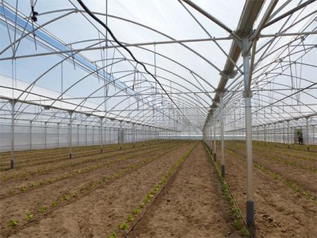 Freshplaza noticias del sector de frutas y verduras - Ulma granada ...