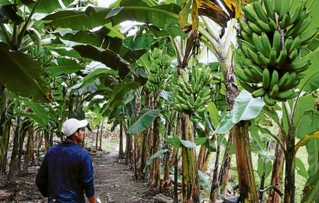 Almacen de bananas y banana para la nena - 2 part 1
