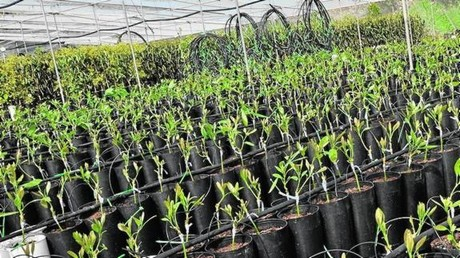Spain one year wait for mango and avocado seedlings for Viveros en granada