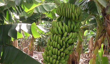 Almacen de bananas y banana para la nena - 1 part 4