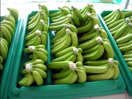 Peru: Demand for organic bananas falls