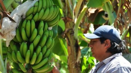 Almacen de bananas y banana para la nena - 2 part 9