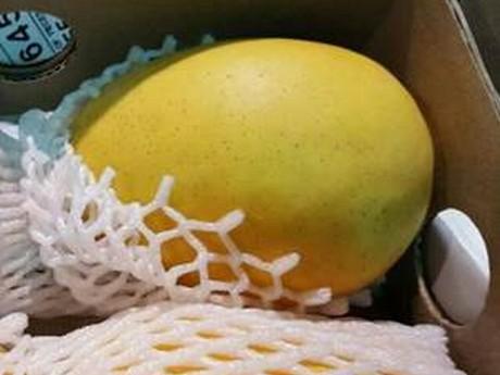 India exports 45% of its Alphonso mango production