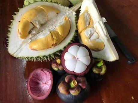 Panorama rural ahora el negocio real de las frutas ex ticas est en la log stica - Frutas tropicales y exoticas ...