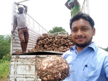India Exports Elephant Foot Yam To Gulf Countries