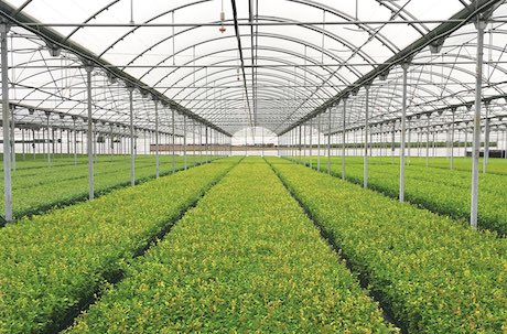 The New Facilities At Fall Creek Europe Produce Blueberry Plants For Their Distribution To Producers In Middle East And Africa