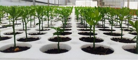 Panorama rural ahora panam el primer vivero comercial for Organizacion de viveros