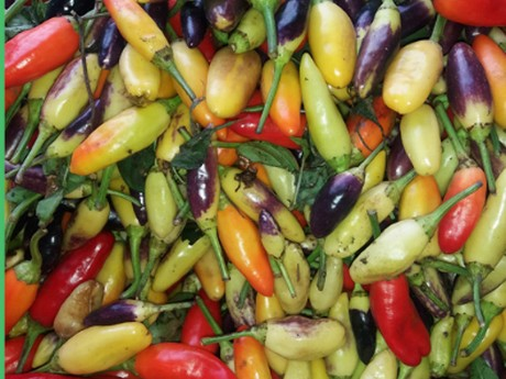 More hot peppers grown in Argentina in recent years
