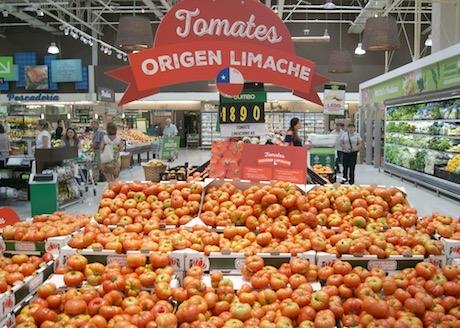 chili 40 jaar Chili: Limache tomaat keert terug na 40 jaar chili 40 jaar